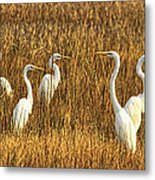 Which-way Metal Print
