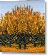 Which Way Metal Print by Susan Candelario