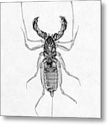Whipscorpion X-ray Metal Print