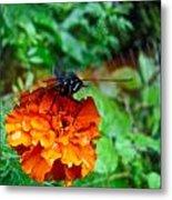 Whirl Wings Butterfly Metal Print