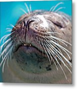 Whiskers Of A Seal Metal Print