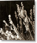 Whisper Gently Metal Print