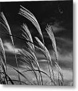 Whispering Wind Metal Print by Dan Crosby
