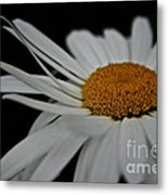 Whispering Wind Metal Print