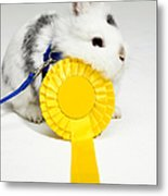 White And Black Rabbit On Blue Leash With Yellow Rosette Metal Print by Michael Blann