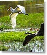 White And Grey Herons In Flight Metal Print