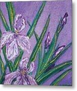 White And Mauve   Irises Metal Print
