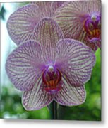 White And Pink Orchid Metal Print