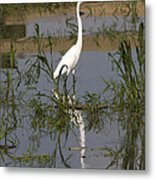 White Bird At June Lake Metal Print