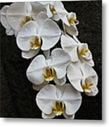 White Bliss Orchids Metal Print