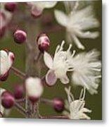 White Blooming Flowers Metal Print