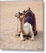 White Camel Metal Print by Jane Rix