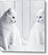 White Cat Reflected In Window Metal Print by Vilhjalmur Ingi Vilhjalmsson