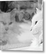 White Cat Reflection With Fly Metal Print