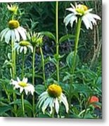 White Daisies And Garden Flowers Metal Print