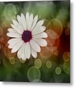 White Daisy In A Sunset Metal Print