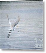 White Egret Flying Metal Print