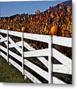 White Fence With Pumpkins Metal Print