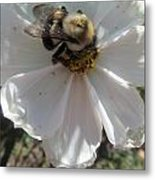 White Flower And Bee Metal Print