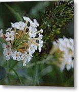 White Flower Metal Print by Beverly Hammond