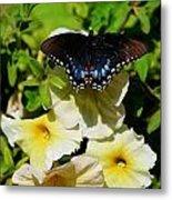 White Flower Butterfly Metal Print