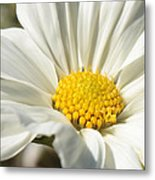 White Flower Metal Print by Carol Groenen