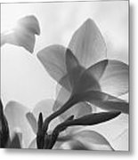 White Flower In The Sun Metal Print