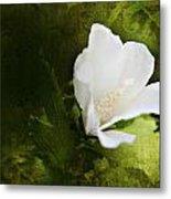 White Flower Texture Metal Print