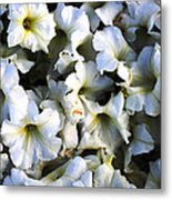 White Flowers At Dusk Metal Print