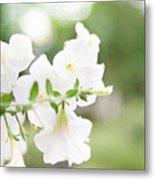 White Flowers In Summer Metal Print