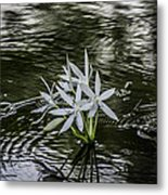 White Flowers In The Stream Metal Print