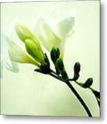 White Freesia Metal Print
