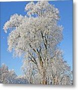 White Frost Tree Metal Print