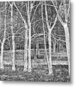 White Grove Metal Print