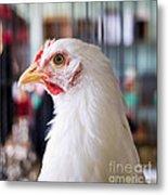 White Hen Metal Print