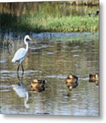 White Heron And Baby Ducks Metal Print