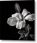 White Hibiscus Inn Black And White Metal Print