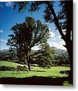 White Horse At Powerscourt, Co Wicklow Metal Print