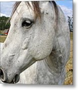 White Horse Closeup Metal Print