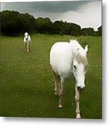 White Horses Metal Print