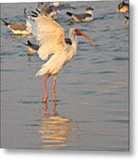 White Ibis With Wings Raised Metal Print
