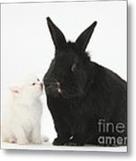 White Kitten And Black Rabbit Metal Print