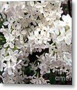 White Lilacs Metal Print