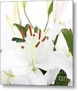 White Lilies And Background Metal Print