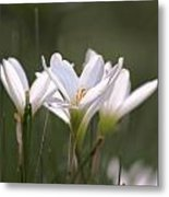 White Lily - Symbol Of Purity Metal Print