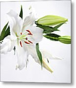 White Lily And Buds Metal Print
