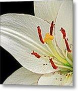 White Lily Metal Print