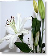 White Lily With Buds Metal Print