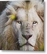 White Lion And Yellow Flowers Metal Print