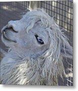 White Llama Metal Print